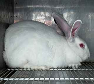Not Tested on Animals: How You Help by Switching to Cruelty-Free Products
